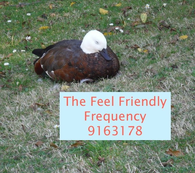 To Feel Friendly…